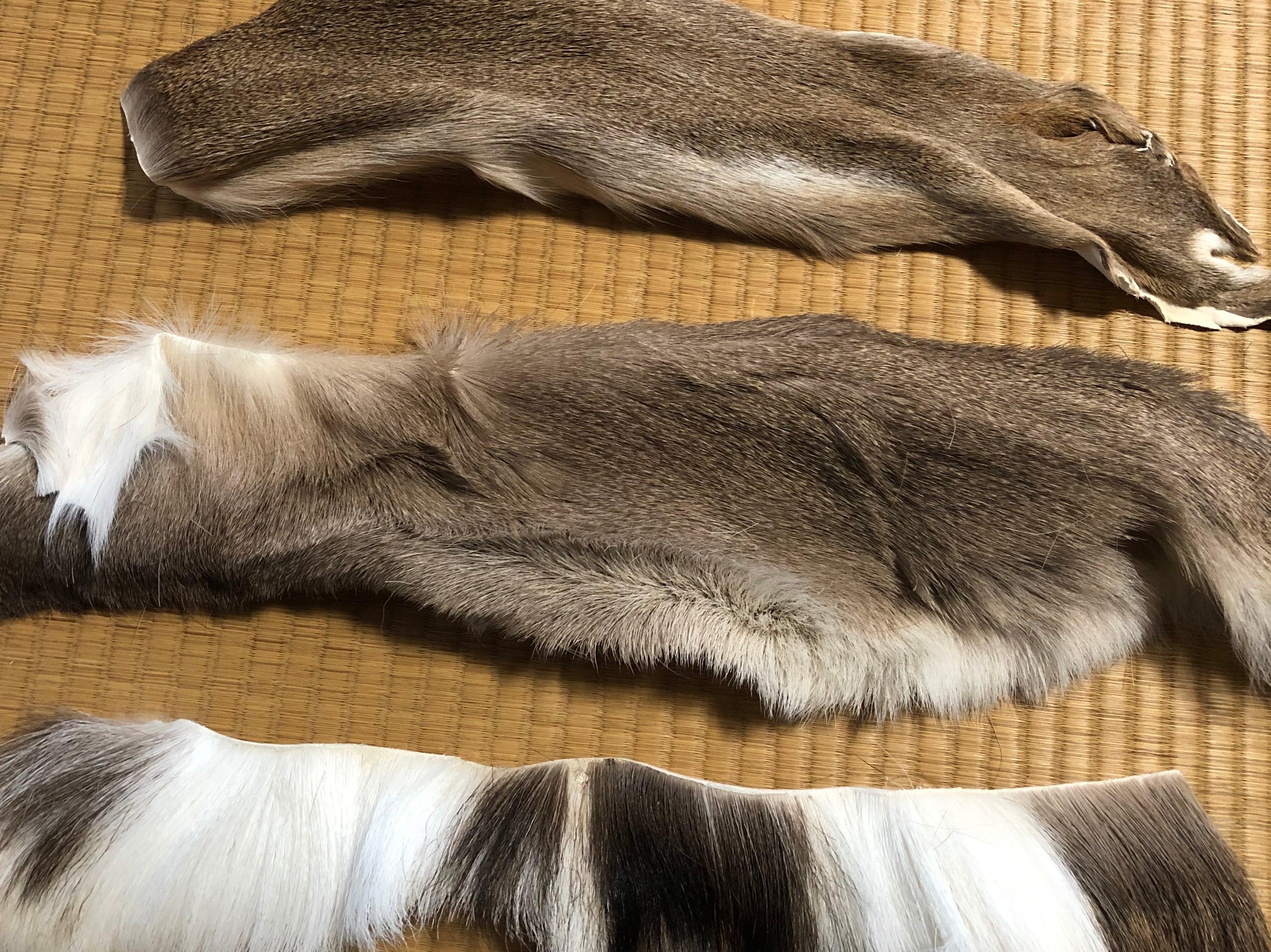 【冬鹿】鹿毛皮ハギレ 1デシ(10cm×10cm)以上