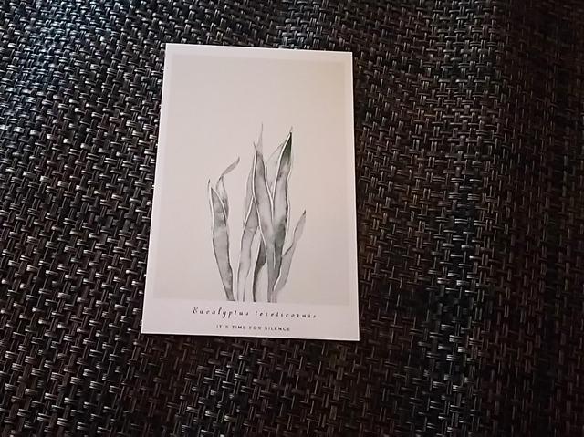 植物 ポストカード G