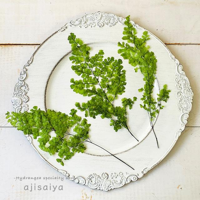 押し花感覚で様々使える定番グリーン アジアンタム・ルーシー <プリザーブドフラワー>