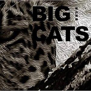 """""""BIG CATS""""  秋山知伸"""