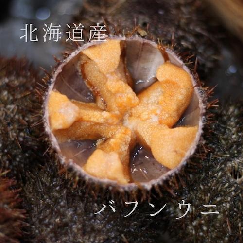 殻付きバフンウニ 北海道噴火湾・浜中産 豊洲直送 5個 生ウニ 鮮魚【バフンウニx5個】冷蔵