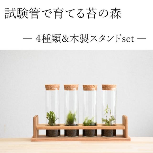 【実験のように楽しむ 苔テラリウム】 試験管4本セット/専用木製スタンド付き