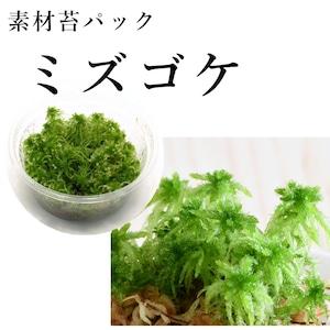ミズゴケ 苔テラリウム作製用素材苔