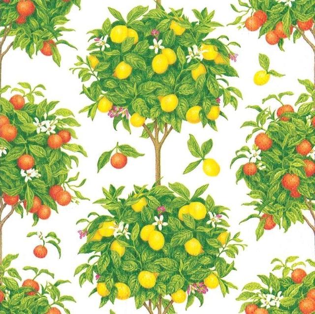 【Caspari】バラ売り1枚 ランチサイズ ペーパーナプキン Citrus Topiaries ホワイト