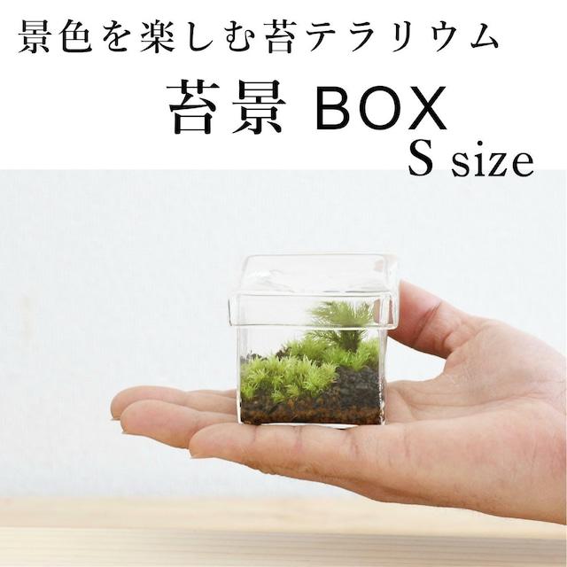 【景色を楽しむ苔テラリウム】苔景BOX Ssize