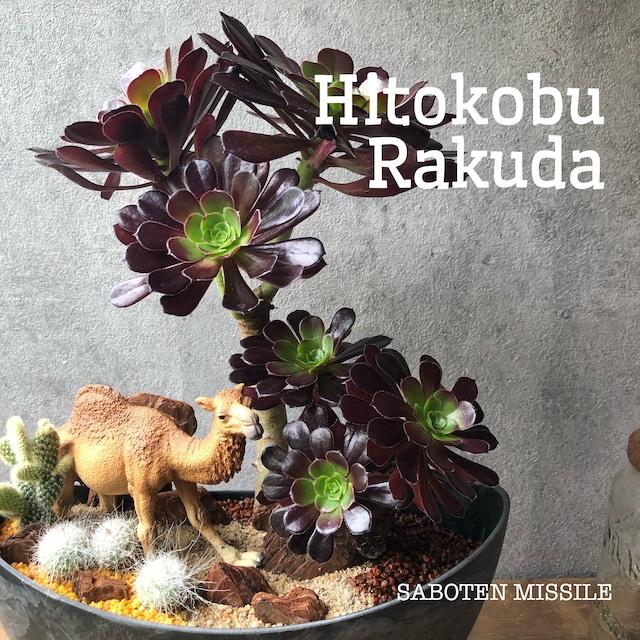 Hitokobu Rakuda