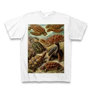 エルンスト・ヘッケル 超絶イラスト カメ Tシャツ -maylime- 【Ernst Haeckel】
