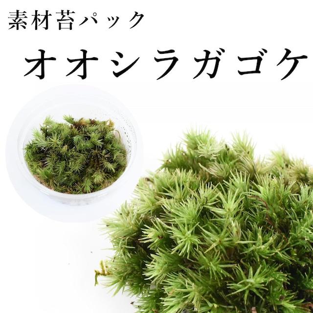 オオシラガゴケ 苔テラリウム作製用素材苔
