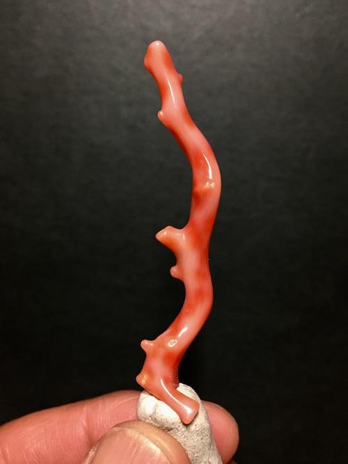 12) 赤サンゴ
