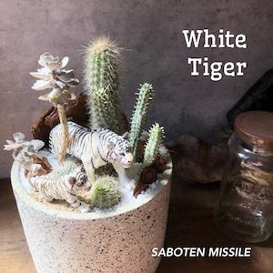 White tiger ホワイトタイガー