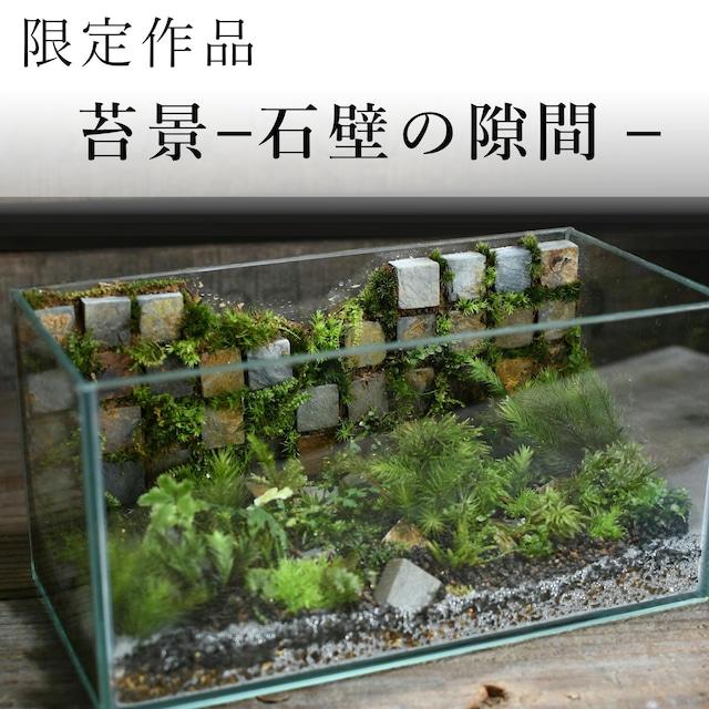 苔景−石壁の隙間 −【苔テラリウム・現物限定販売】11.15#3