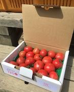 フルーツトマト750gお試し箱☆ご家庭用<送料無料※>