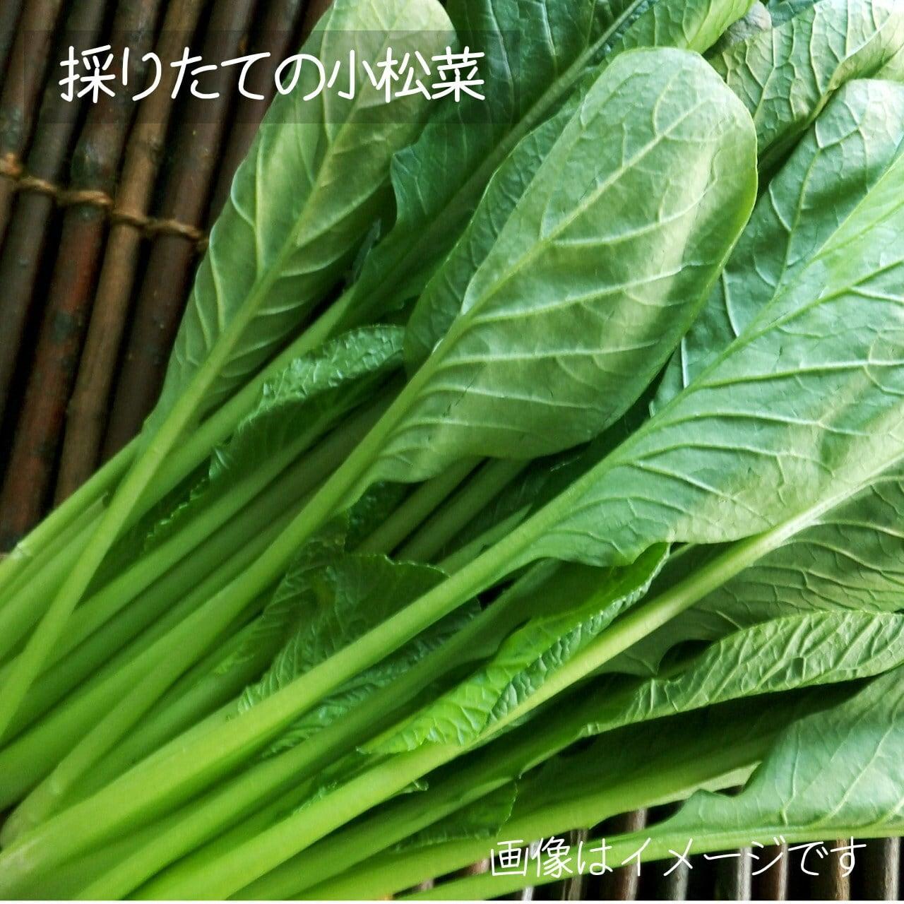 新鮮な夏野菜 : 小松菜 約200g 8月の朝採り直売野菜  8月29日発送予定