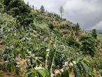 ジャマイカ ウォーレンフォード農園・W ブルーマウンテンNo.1(100g)