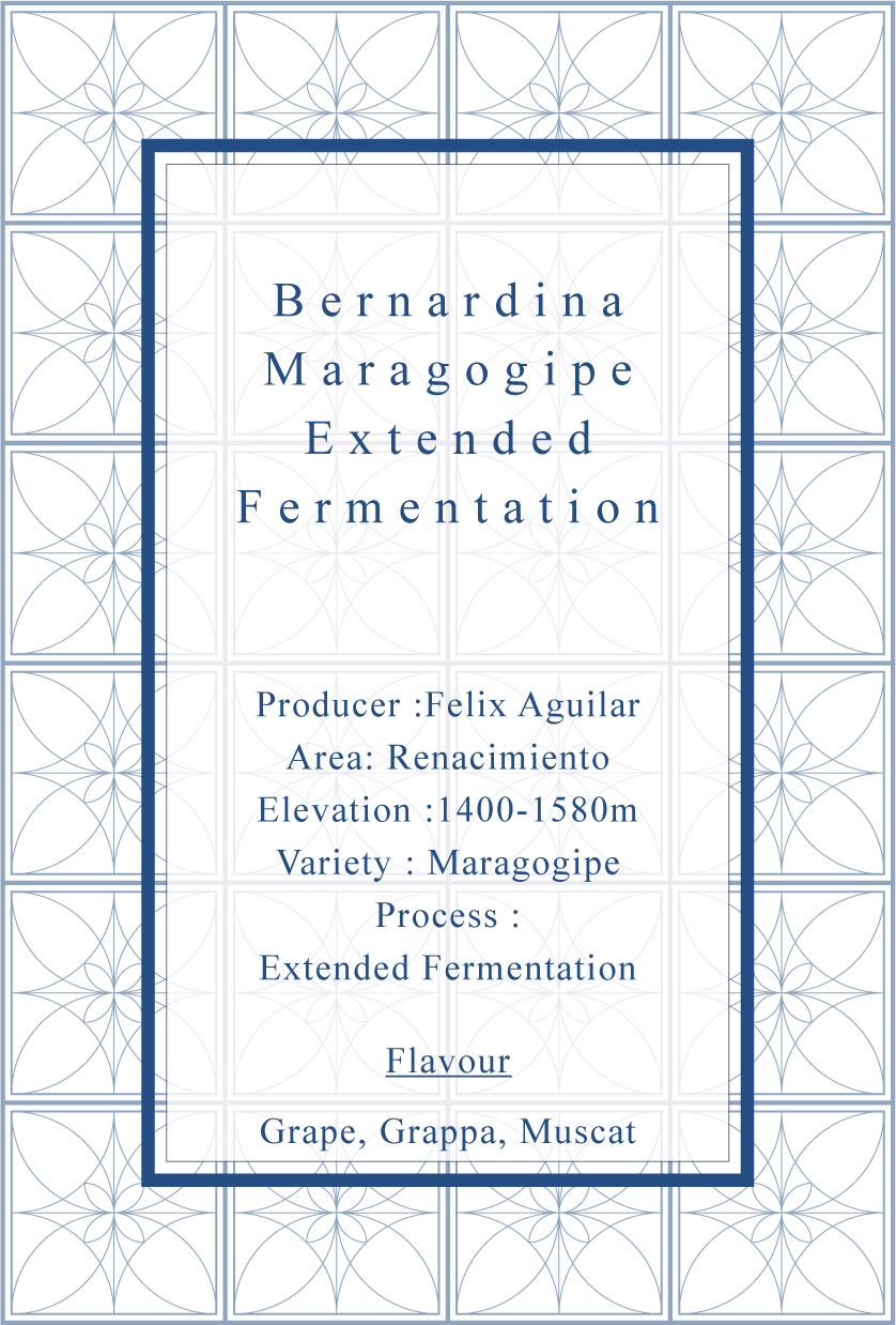 Bernardina Maragogype Extended Fermentation