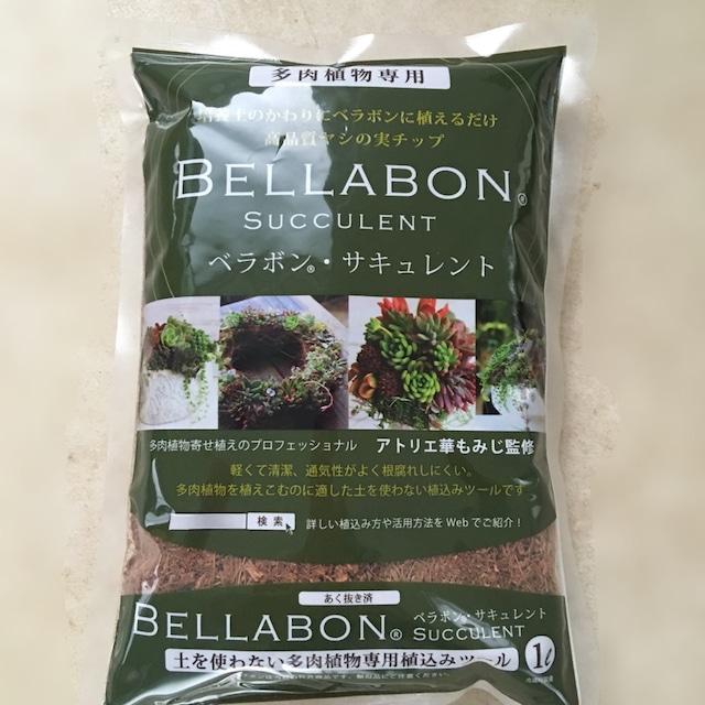 【ベラボンサキュレント】多肉植物ギャザリング寄せ植え用1リットル - メイン画像