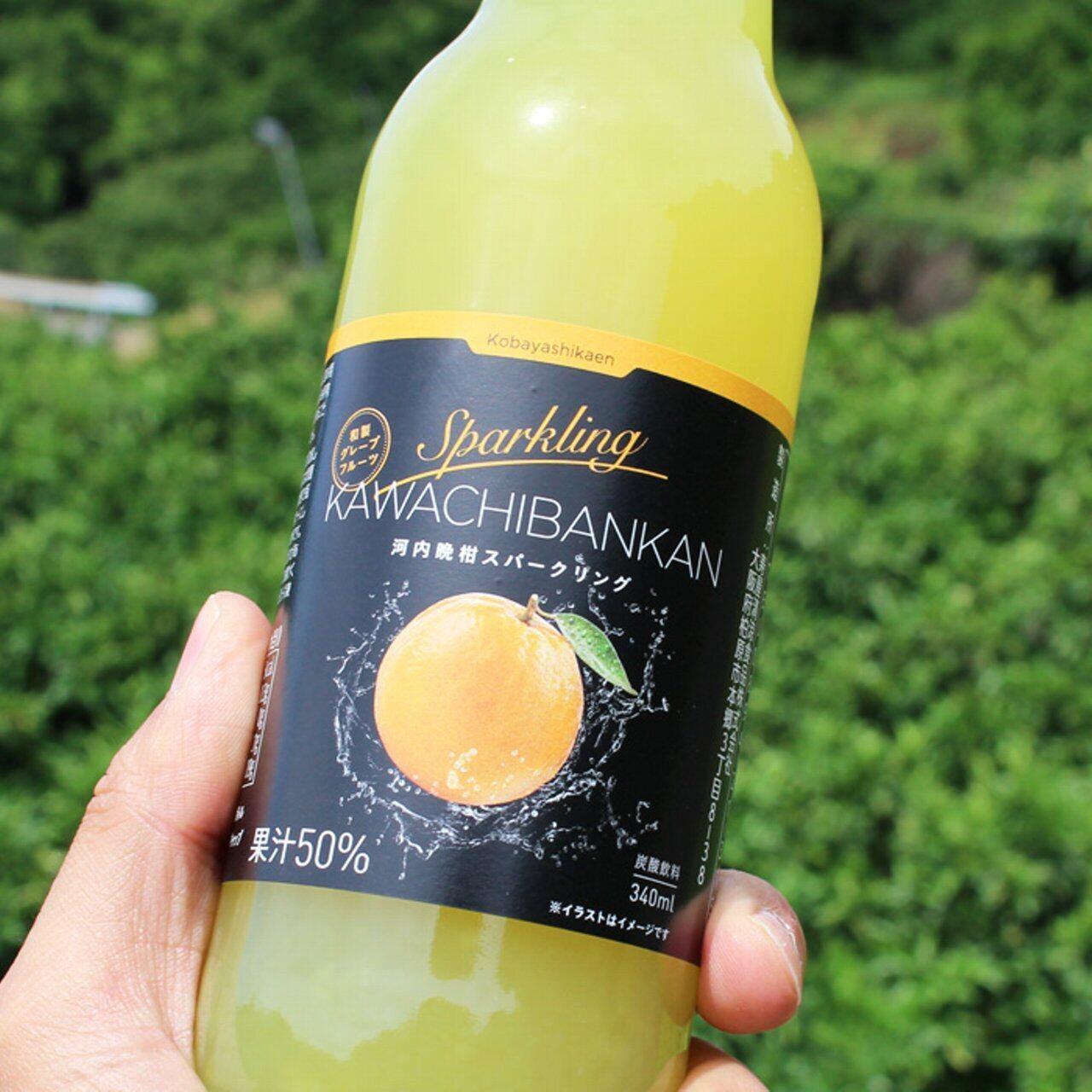 柑橘スパークリング・ジュース 340ml 3本 みかん/河内晩柑 各3本 (1箱/計6本セット)
