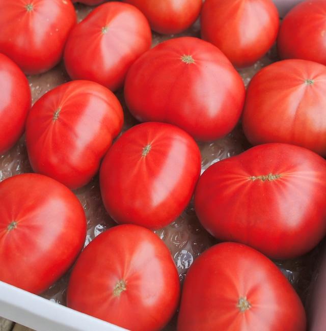 ご家庭用フルーツトマト約1,800g☆規格外・訳あり