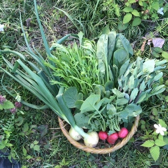 わくわく野菜セットS(5~6種類)宅急便バージョン