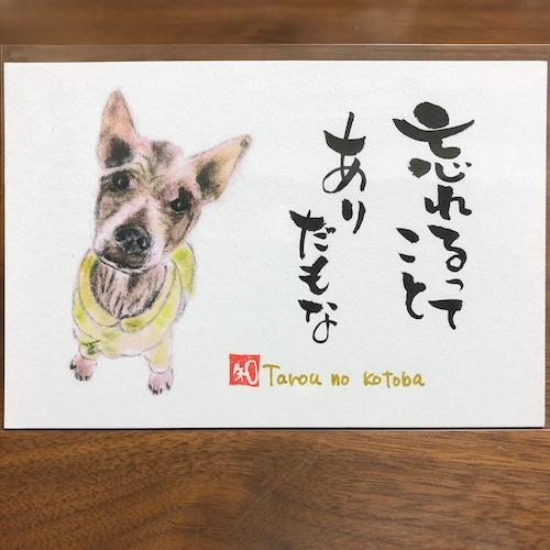 ポストカード 63(太郎)