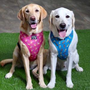 BIG & LITTLE DOGS【XXL】Classic Harness