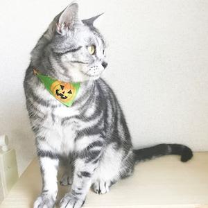 【おばけかぼちゃ柄】猫用バンダナ風首輪/選べるアジャスター 猫首輪 安全首輪 子猫から成猫