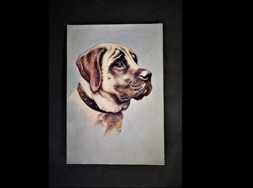 イギリス アンティークポストカード 犬の絵 絵葉書 The Mastiff マスチフ マスティフ