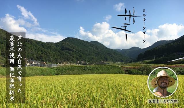 米手 ミルキークイーン  5kg 農薬不使用 化学肥料不使用