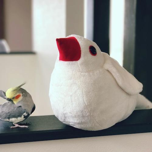 (新サイトで再販!)抱き文鳥ぬいぐるみ 白文鳥