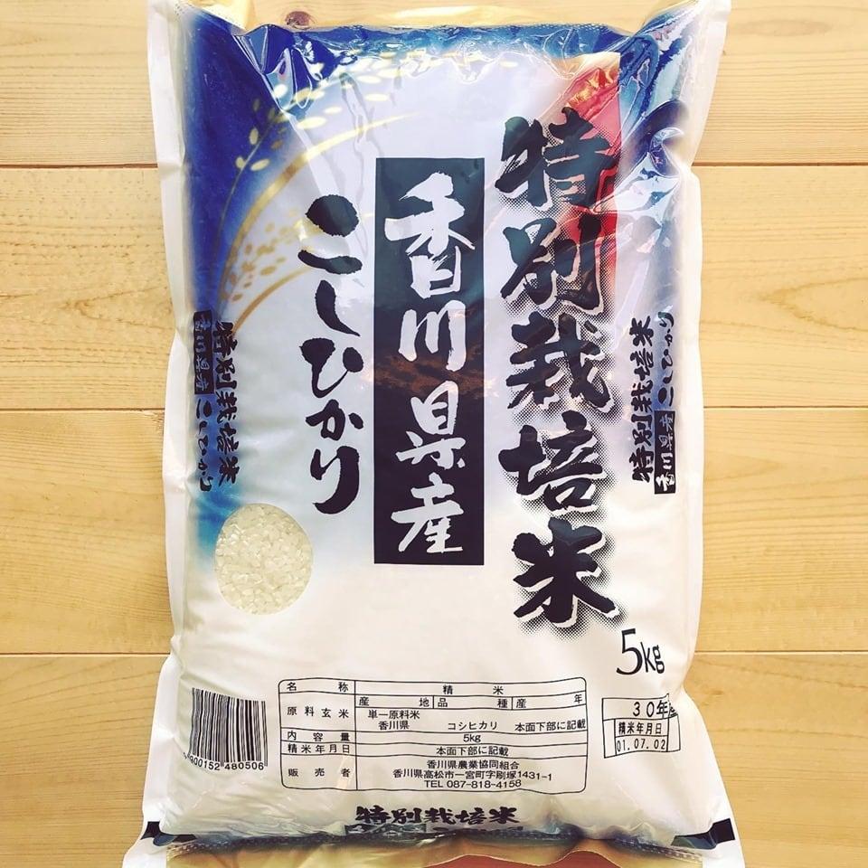 \定期購入&送料無料/特別栽培米香川県産こしひかり5kg