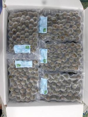 Dracontomelon(Sấu đông lạnh) 200g/袋