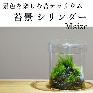 【景色を楽しむ苔テラリウム】苔景シリンダー Msize