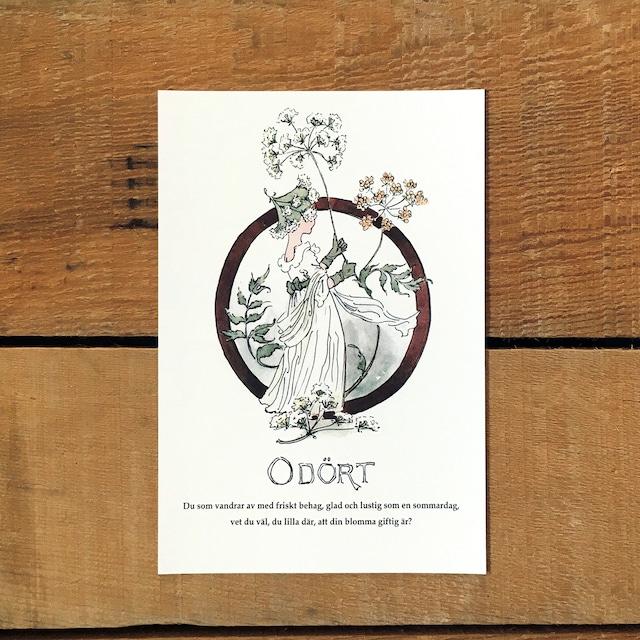 ポストカード「ドクニンジン@ODÖRT(王子たちの花文字 - 15)」
