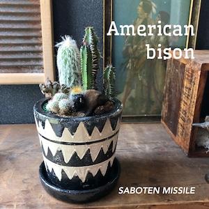 American bison バッファロー