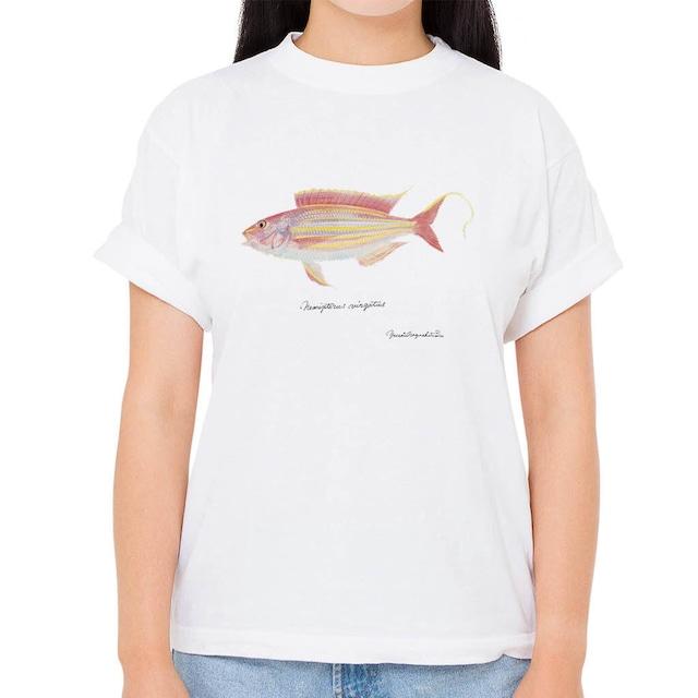 【イトヨリダイ】長嶋祐成コレクション 魚の譜Tシャツ(高解像・昇華プリント)