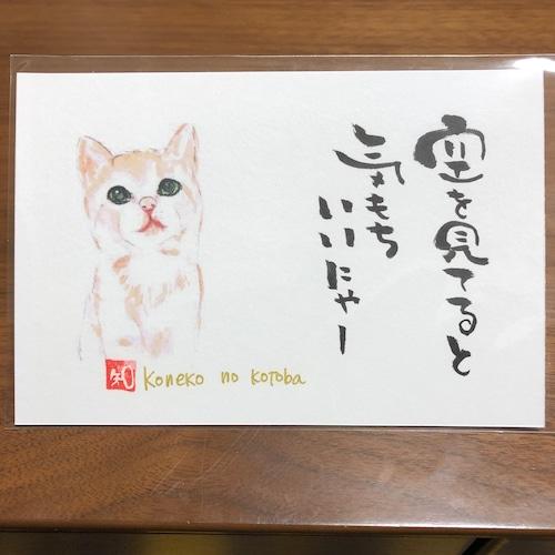 ポストカード 77(子猫)