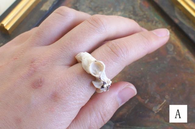 鹿角彫刻の指輪(鹿頭骨)