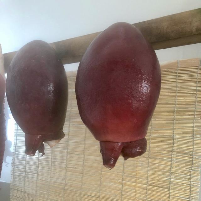 真タコ 頭(約1.1〜1.5kg)