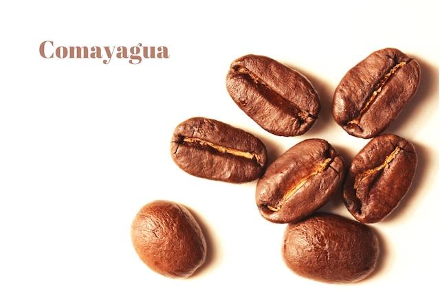 【新入荷10/15~】コマヤグア(ホンジュラス産)200g(1袋)
