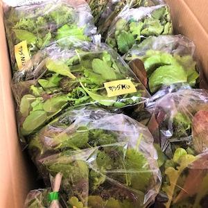 信州産 自然栽培『ファミリー定期便』月1回 100サイズ(農薬、肥料不使用)