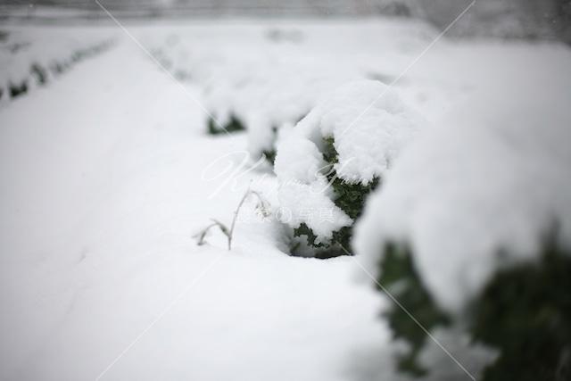276 雪景色