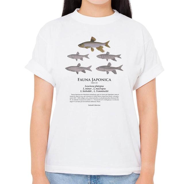 【オイカワ・カワムツ】シーボルトコレクション魚譜Tシャツ(高解像・昇華プリント)