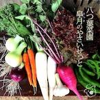 八つ葉菜園 皐月の野菜せっと