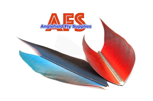【 AFS 】Macaw Side Tail Blue-Red