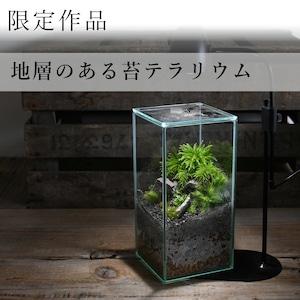 苔景−地層のある苔テラリウム −【苔テラリウム・現物限定販売】