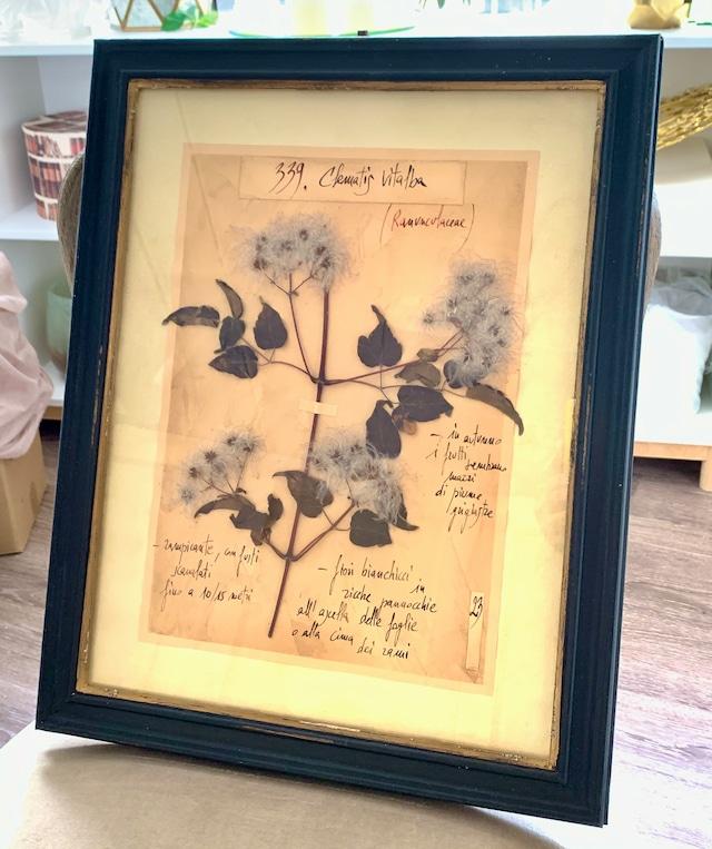 ハーバリウム (植物標本)アート・ブラックフレーム
