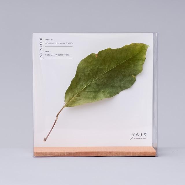 1131_メグスリノキの葉