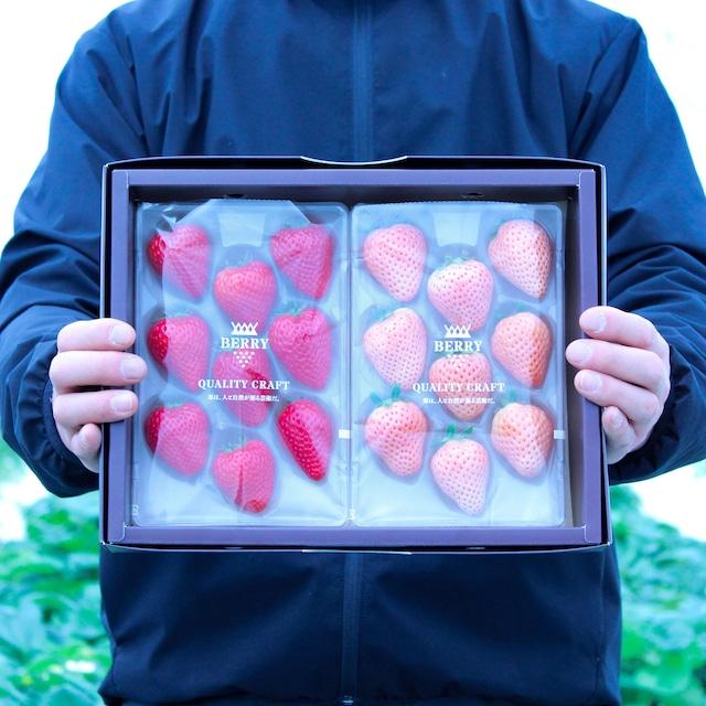 完熟紅白いちご「よつぼし/淡雪」セット 伊賀農園直送(予約販売 2021年12月中旬〜2022年1月上旬頃発送)