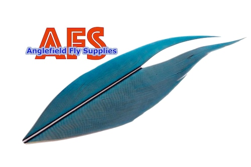 【 AFS 】Macaw Center Tail Blue-Yellow