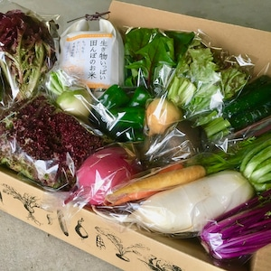 お米とお野菜のセットM(送料別途)